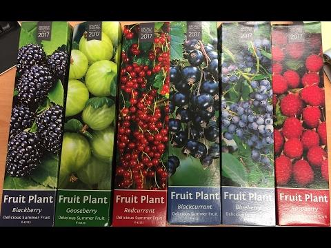 Soft Fruit Plants Raspberry,Blueberry,Blackberry,Gooseberry,Redcurrant & Black Currant Part 1