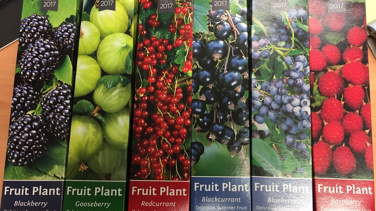 Soft Fruit Plants Raspberry Blueberry Blackberry Gooseberry Redcurrant Black Currant Part 1