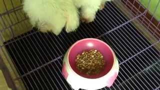 My cute Baby Mallows So cute!!! - CreamCupcakes Thumbnail