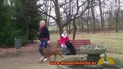 """Deutscher Schäferhund """"Quattro vom Nordenstamm"""" ausgebildet in der Hundeschule Leipzig"""