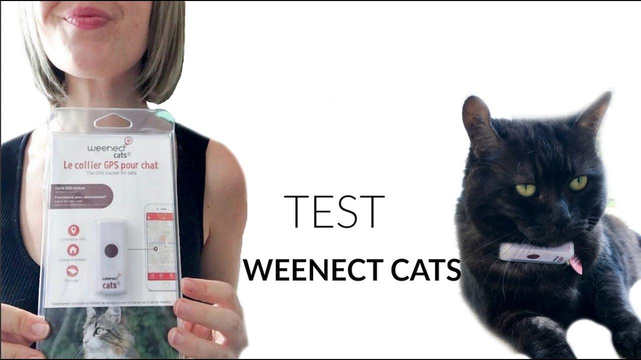 test weenect cats j ai mis une balise gps 224 mon chat