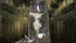 Cat Souls III