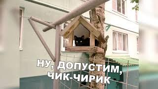 ЛУЧШИЕ ПРИКОЛЫ 2019 / Сентябрь / №4 / ржака  /угар / ПРИКОЛЮХА / юмор