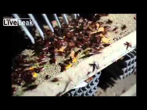 how to keep cockroaches out of worm farm