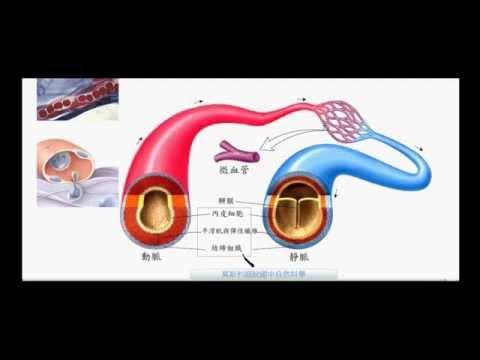 國一生物_血管的比較_動脈_靜脈_微血管【莫斯利國中自然科學】【國中生物】
