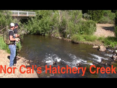 Trout Fishing Northern California's Hatchet Creek