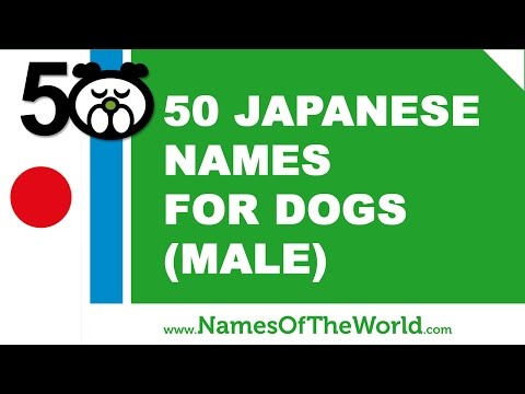 50 Japanese Names For Male Dogs -  Best Dog Names - Www.namesoftheworld.net