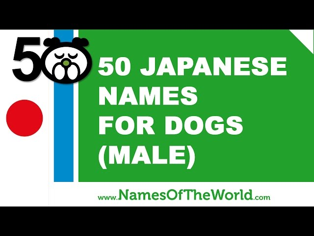 Japanese Dog Names: All About Male & Girls / Female Name Ideas