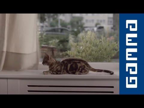 Kat in gordijnen - GAMMA commercial - YouTube