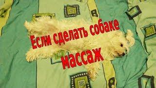 Аааа жесть | Если сделать собаке массаж!