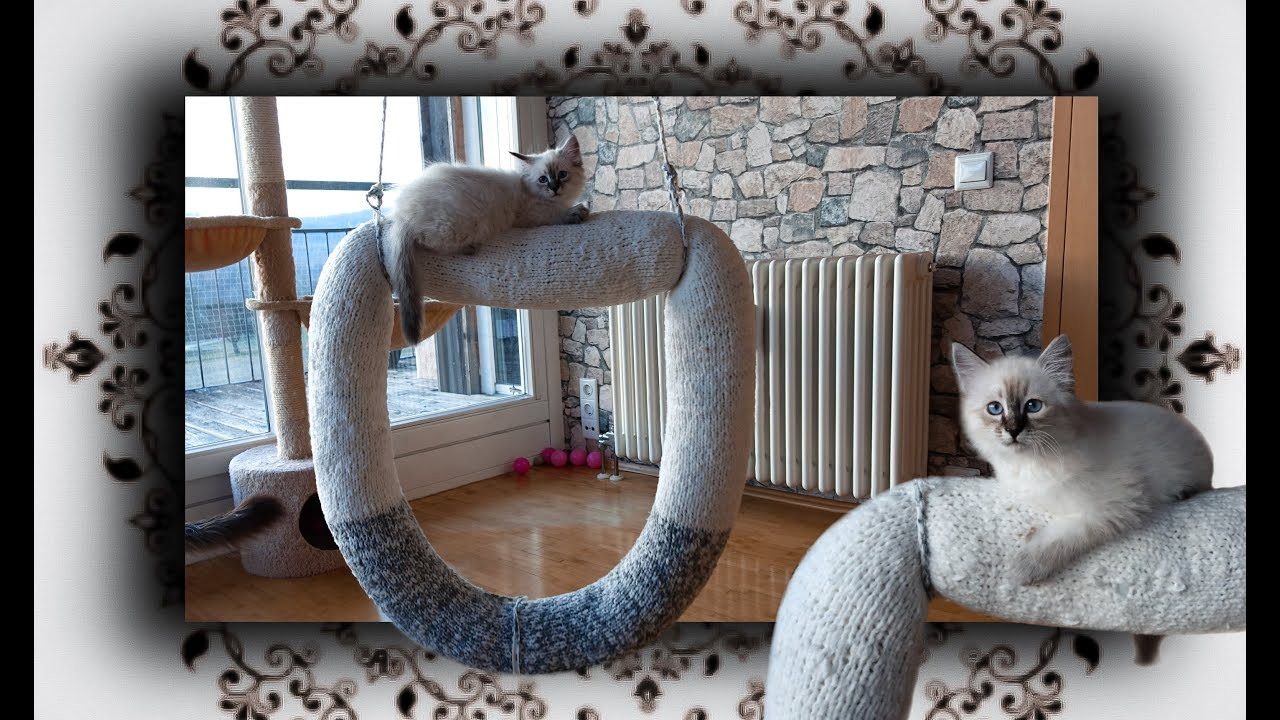 diy dounat schaukel f r katzen knit swing for cats. Black Bedroom Furniture Sets. Home Design Ideas