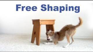 Dog Tricks Tutorial- Crawl Under Free Shaping