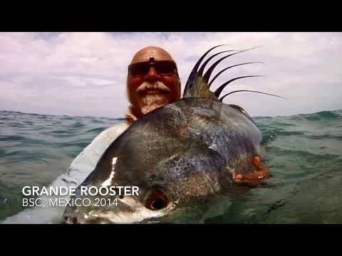 DIY Fly Fishing For Grande Roosterfish