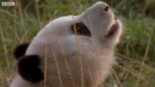 Funny Animals Talking For Sport Relief - Walk On the Wild Side - BBC Sport Relief Night 2010