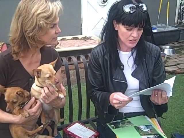 Amazing Pauley Perrette NCIS fan Donates to Her Animal Shelter: Amanda Foundation