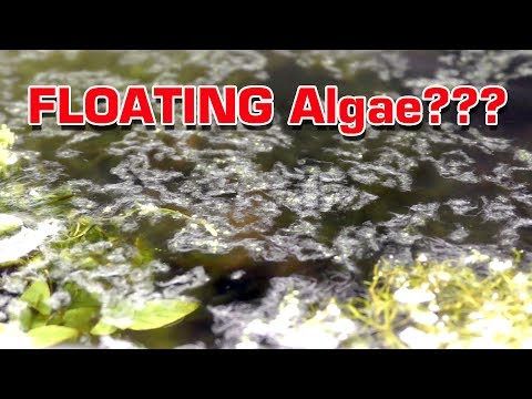 FLOATING Aquarium Algae Problem - WHAT IS IT? Removing it.