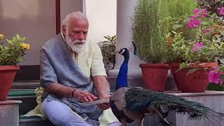 Precious moments: PM Modi feeding peacocks at his residence