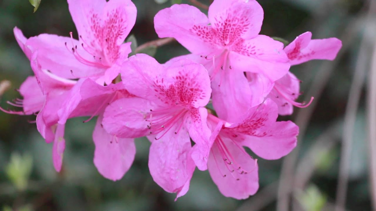 Private Video Pink Flowers Youtube