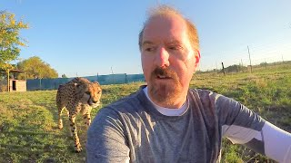Turning Your Back To Leopards & Cheetahs | BIG CATS Show Their Predatory Nature Part 2 thumbnail
