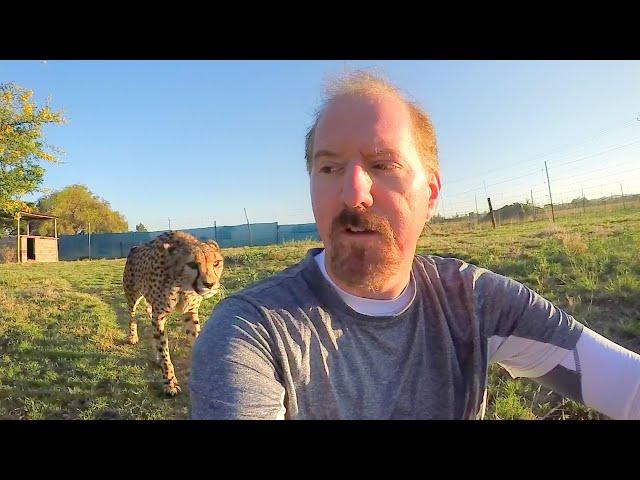 ¿Le puedes dar la espalda a un guepardo? Este espeluznante vídeo tiene la respuesta