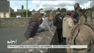 ANIMAUX : L'âne Normand, un animal phare de la Manche