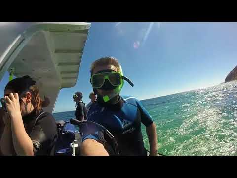 Dolphin Swim Kangaroo Island