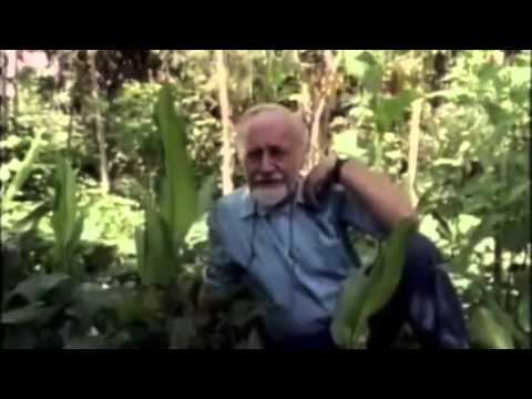 Permaculture 2015 Bill Mollison   Permaculture and the Subtropic Food Forest