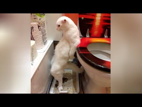 The FUNNIEST CAT videos - WATCHING WITHOUT LAUGHING is IMPOSSIBLE!