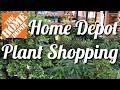 Plant 🌿 Shopping 🛒 at 🧡 Home Depot 🧡 Garden 🌱 Center Houseplants 🌵 at Home Depot