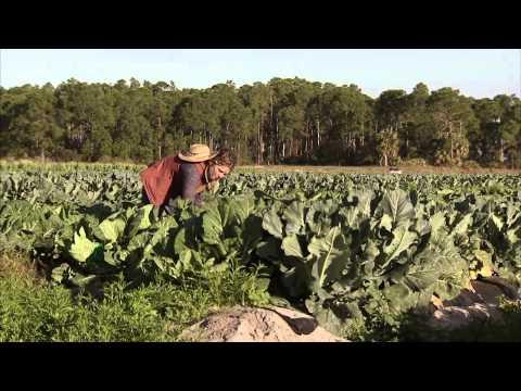 Florida Farmers Feed America - America's Heartland