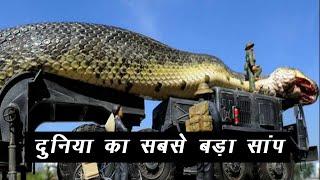दुनिया का सबसे बड़ा सांप | World's Largest Snake | Hindi |
