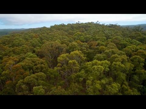 The Greens (WA) | Precious Places
