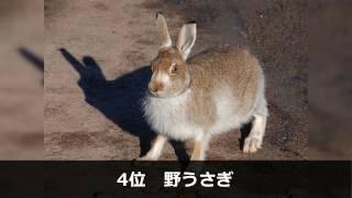 1位 チーター 2位 トナカイ 3位 トムソンガゼル 4位 野ウサギ 5位 犬 (...