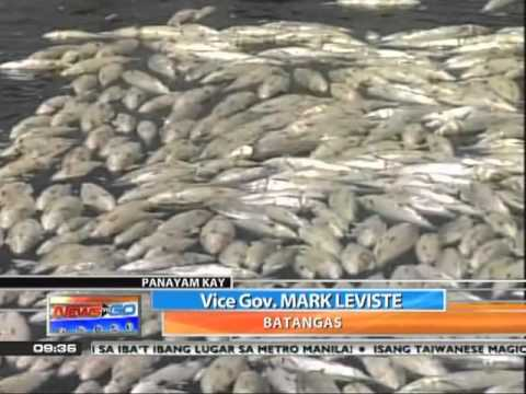News To Go - Howie Severino Interviews Batangas Vice Gov. Leviste About Fish Kill 6/3/11