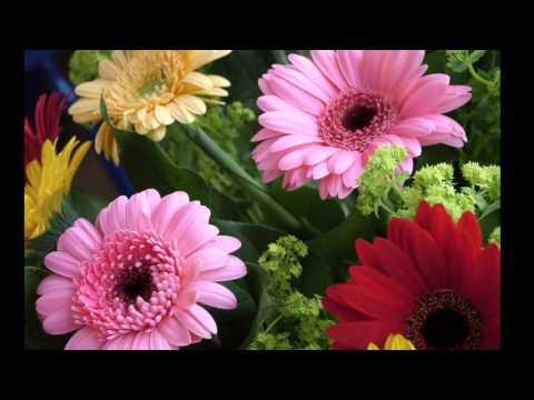Alfabetul Florilor