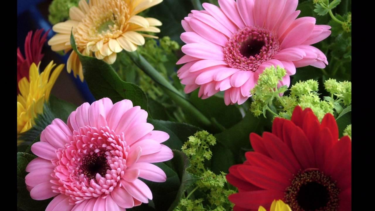 Nume De Flori Cu Litera M