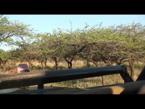 Afrique du Sud - Partie 2/6 - Durban & le Pays Zoulou