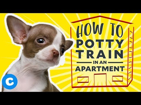 Puppy Potty Training In An Apartment | Chewy
