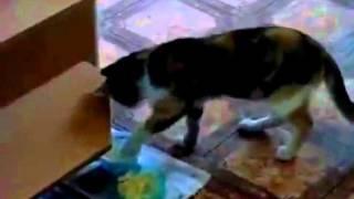 кошки без лошки, Смех и только, Новые Приколы, Шутки, Смешные ролики Юмор! Прикол! Смех Смешные прик