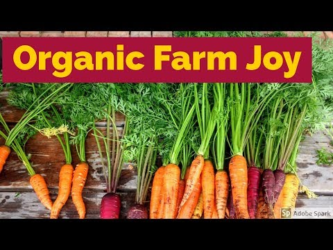STAYING ON AN ORGANIC FARM || SOUTH AFRICAN YOUTUBER