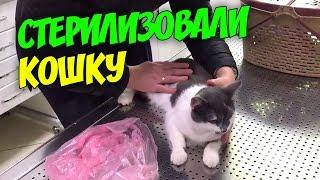 Стерилизовали кошку Как она мучается после операции ВЛОГ