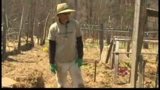 Spring Gardening Tips : Spring Gardening Tasks