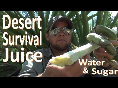 Survival Desert Sugar Water -Yucca Juice-