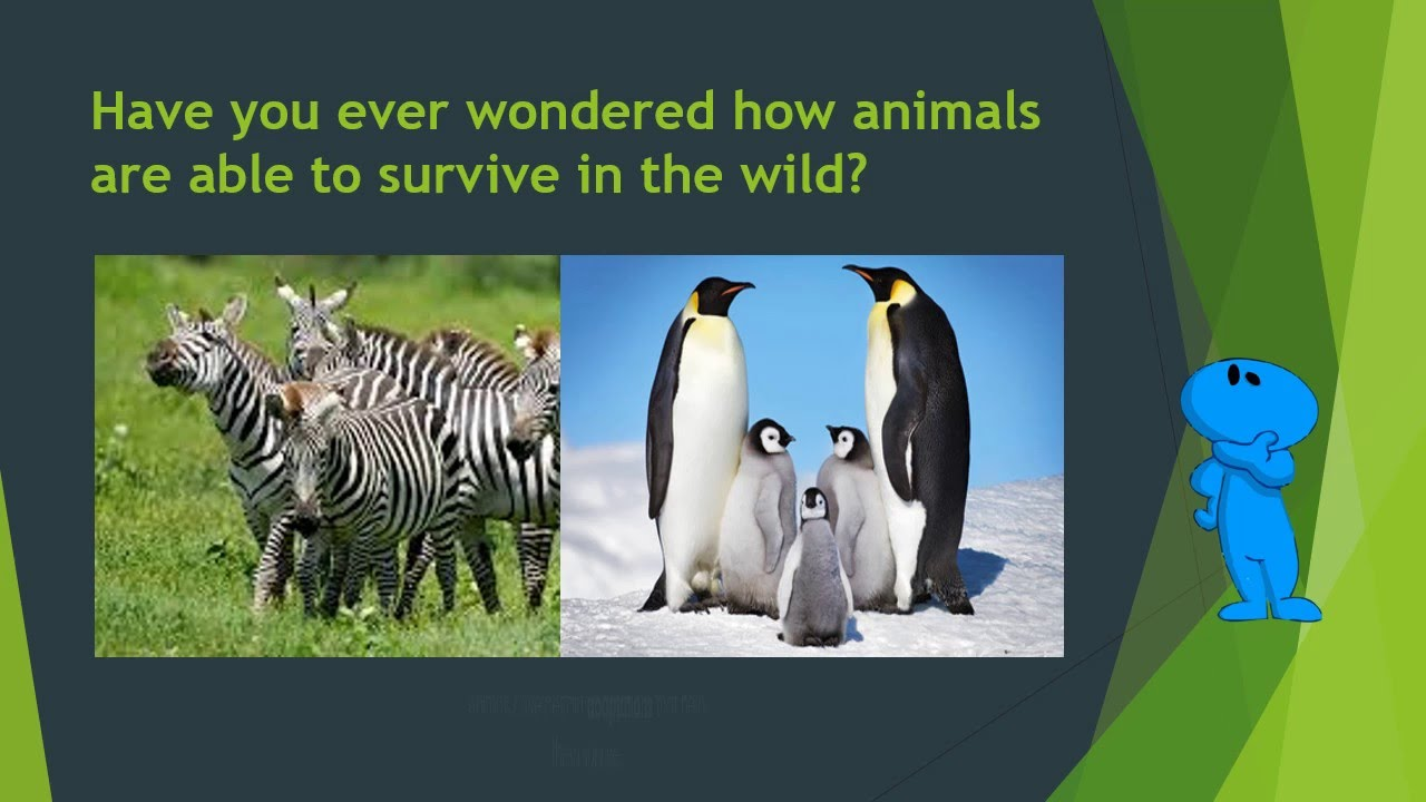 Wild animals pictures ppt