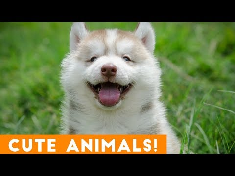 Cutest Pets & Animals of the Week Compilation November 2018 | Funny Pet Videos