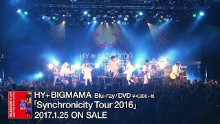HY+BIGMAMA「Synchronicity Tour 2016」 ティザー映像