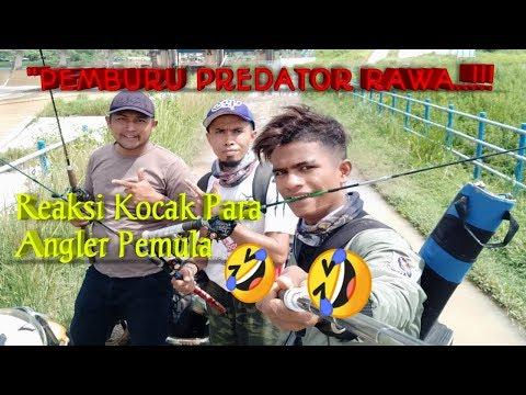 PEMBURU PREDATOR RAWA..!!// ANGLERS PEMULA