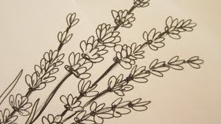 How To Draw flowers - Draw Lavender Flowers