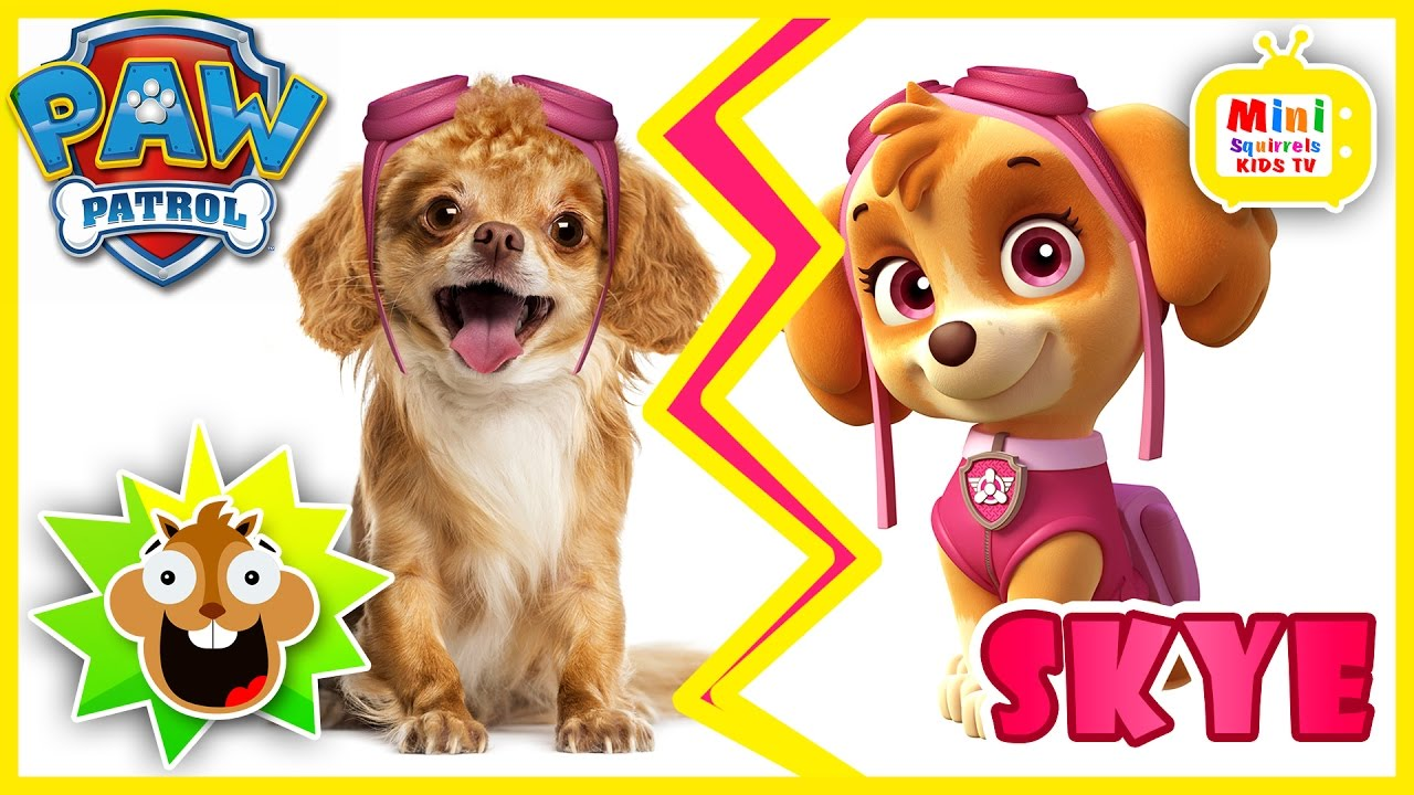 What Are The Breed Of Dogs On Paw Patrol