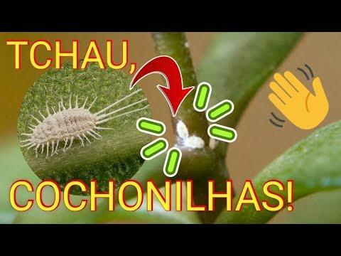 Cochonilhas: APRENDA a INFALÍVEL fórmula para ELIMINAR pragas das plantas